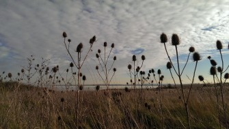 Looking out towards Mucking Flats through some thistles | Stuart Bowditch