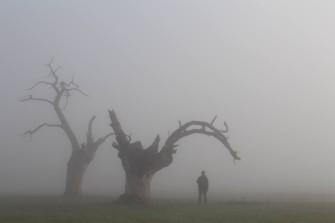 A foggy December morning at the Mundon Oaks | Damien Robinson