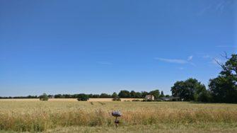 Country lane amongst the fields at Lindsell   Stuart Bowditch