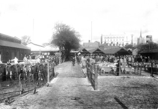 Black and white photograph of the Chelmsford Cattle Market | Spalding Collection, Essex Record Office