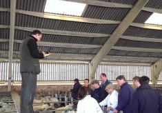 Sheep auction, Stanfords, 2016