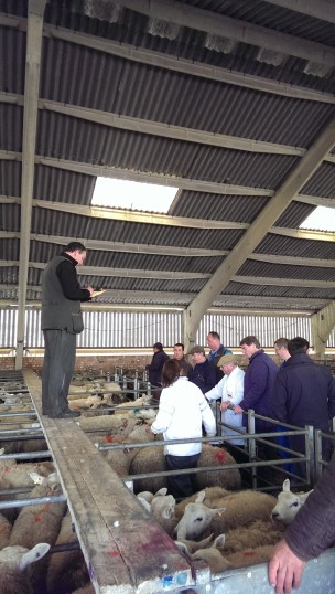 Auctioneer Tim Brassington leading the sale of the sheep. | Stuart Bowditch