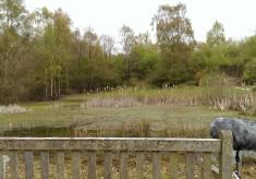 Trout Pond, Fingringhoe, 2016