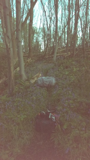 Early morning amongst the Bluebells in Norsey Woods. | Stuart Bowditch