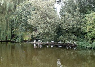 Photograph of ducks on water under trees at Southchurch Hall | John Myers