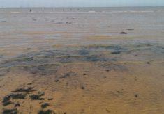 Seaside soundscapes