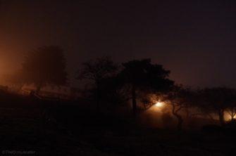 Shrubbery fog