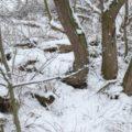 Walking in a Winter Wonderland, 2018