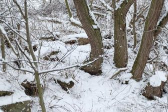 Trees in snow | Essex Record Office