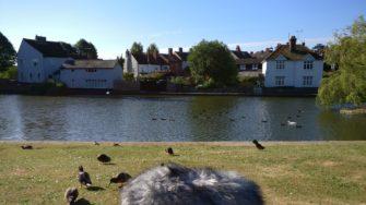Birds beside Doctors Pond, Great Dunmow | Stuart Bowditch